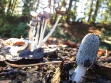 fungi.racheldragonfly-13