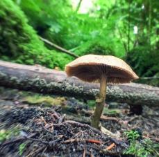 fungi.racheldragonfly-2