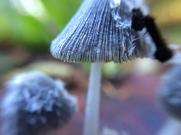 fungi.racheldragonfly-9